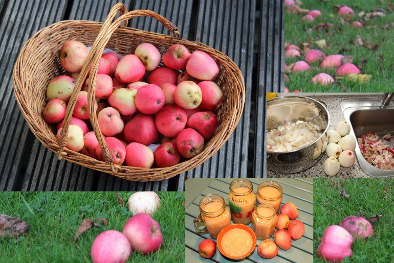 Vinterforråd med æbler