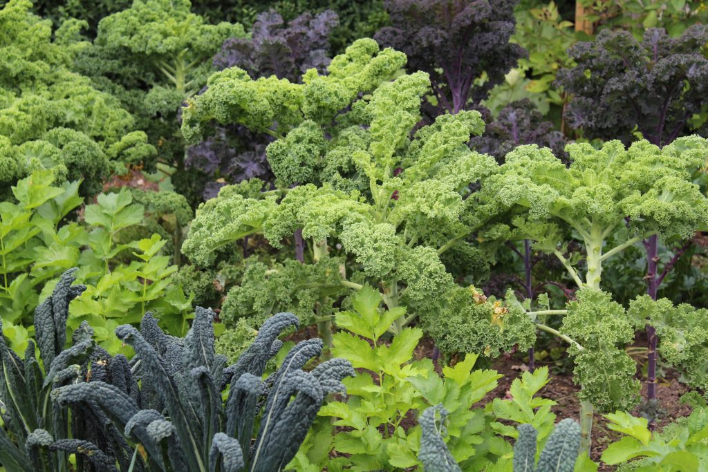 Grønne bladgrøntsager