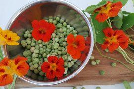 Blomsterkarse-frøkapsler