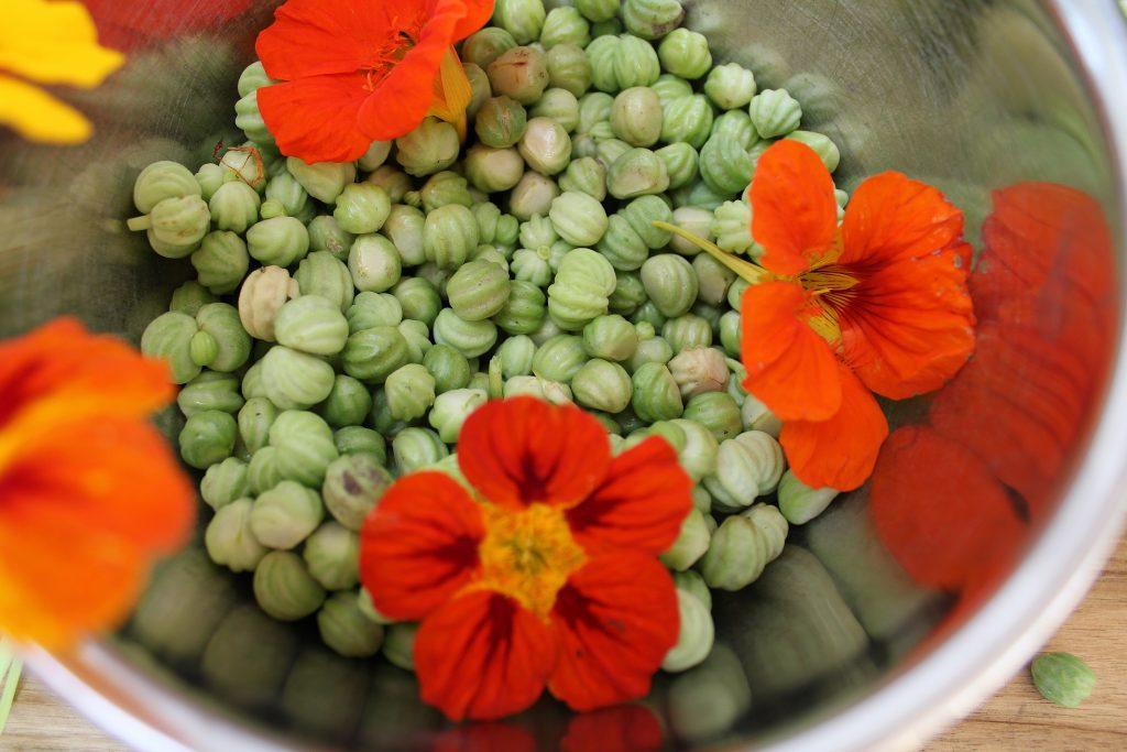 Frøkapsler fra blomsterkarse